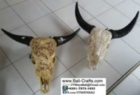 bhc-9a-carved-cow-skull-bone-bull-heads-from-bali-indonesia